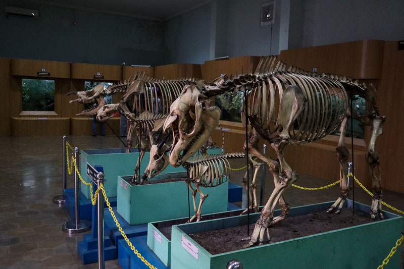 Musée zoologique de Bogor