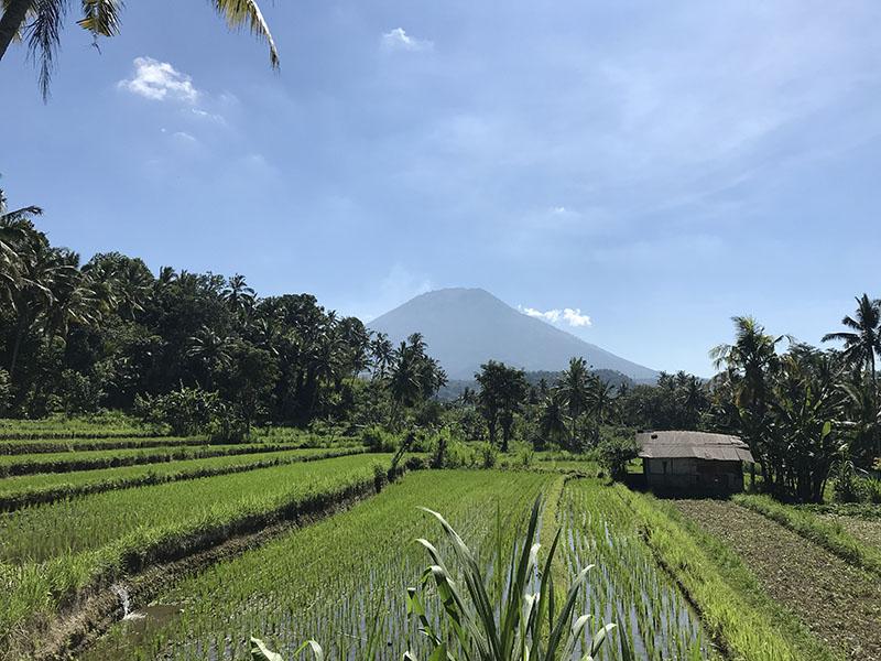 riziere Agung Amed Bali