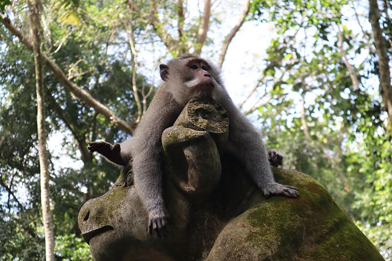 Singe à la Monkey Forest d'Ubud