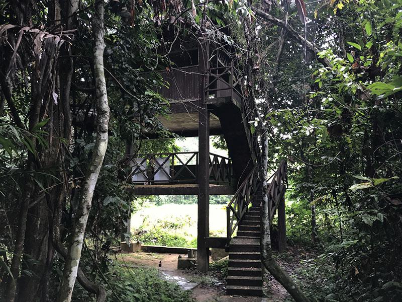 Bumbuns taman negara parc